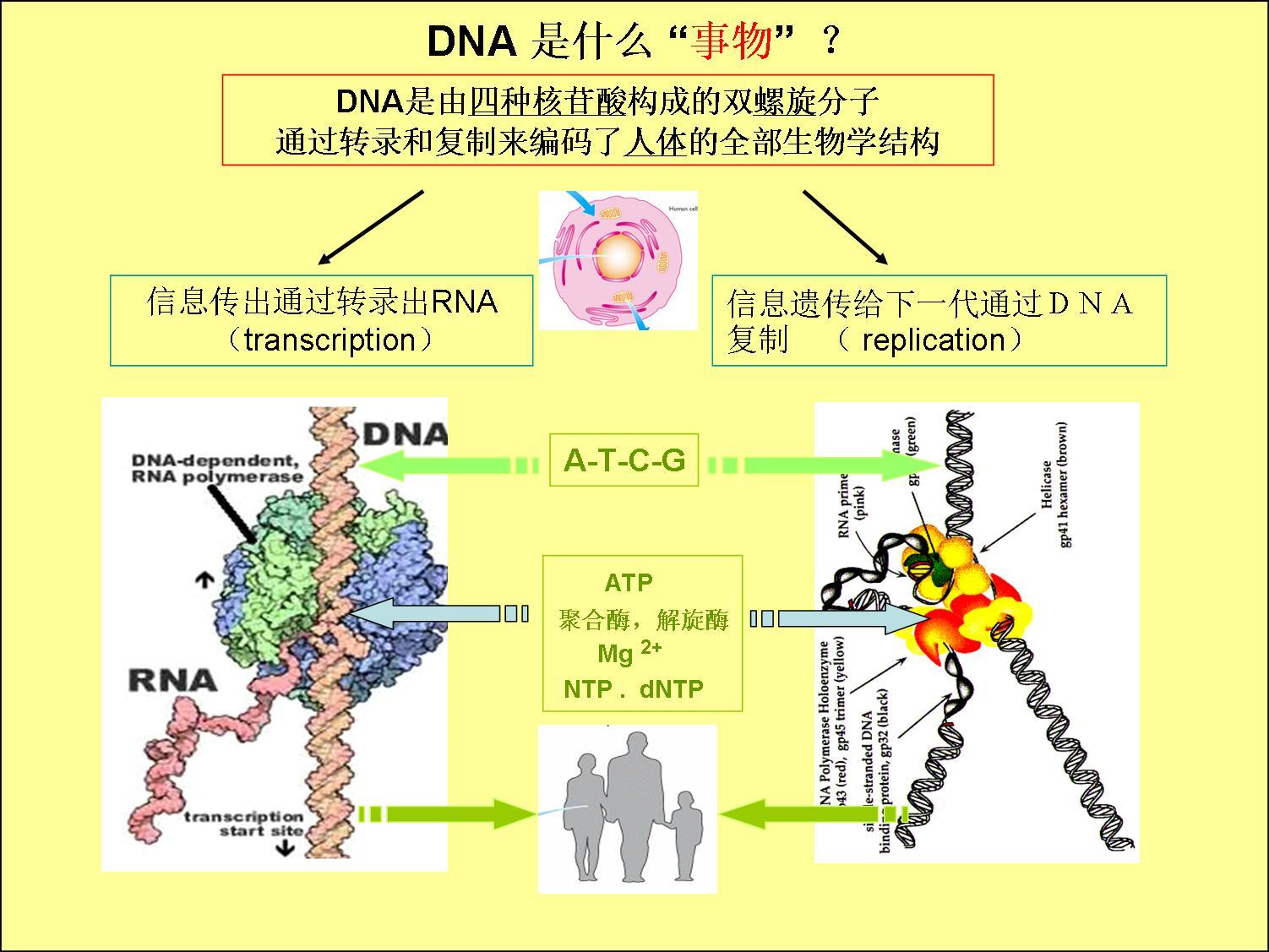 dna分子是螺旋结构吗